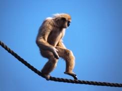 groovy monkey