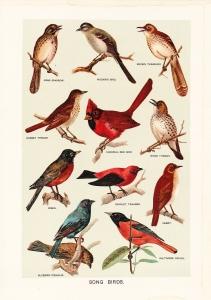 birds_evensong